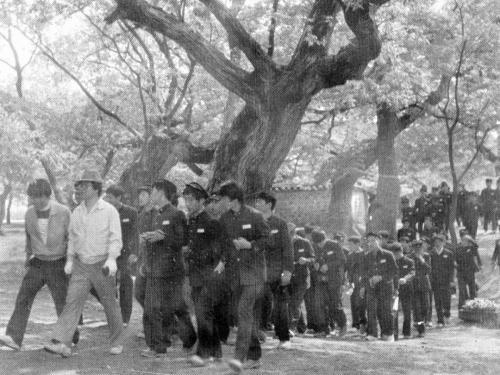1981 수학여행